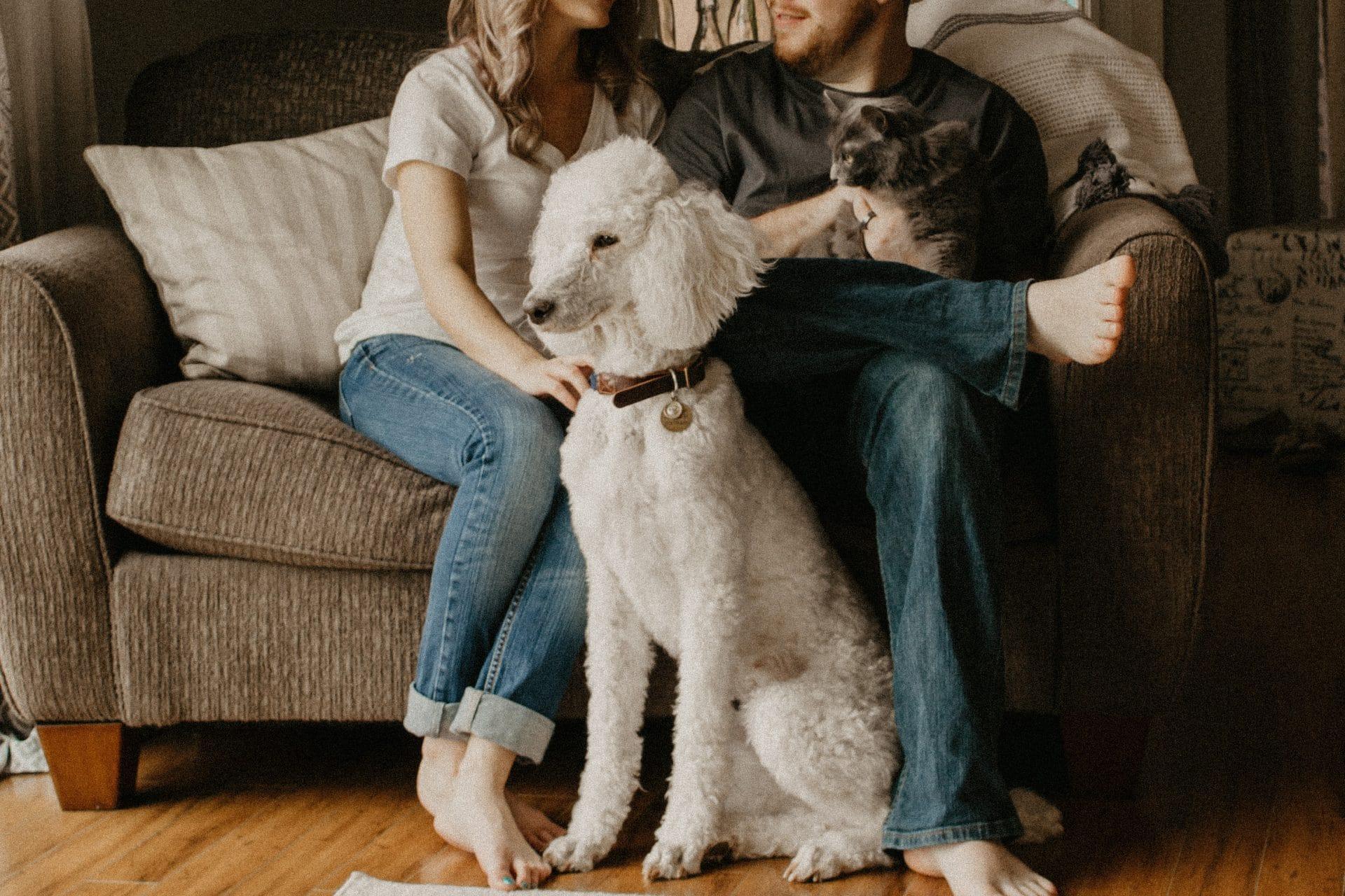 Pet Spending Statistics
