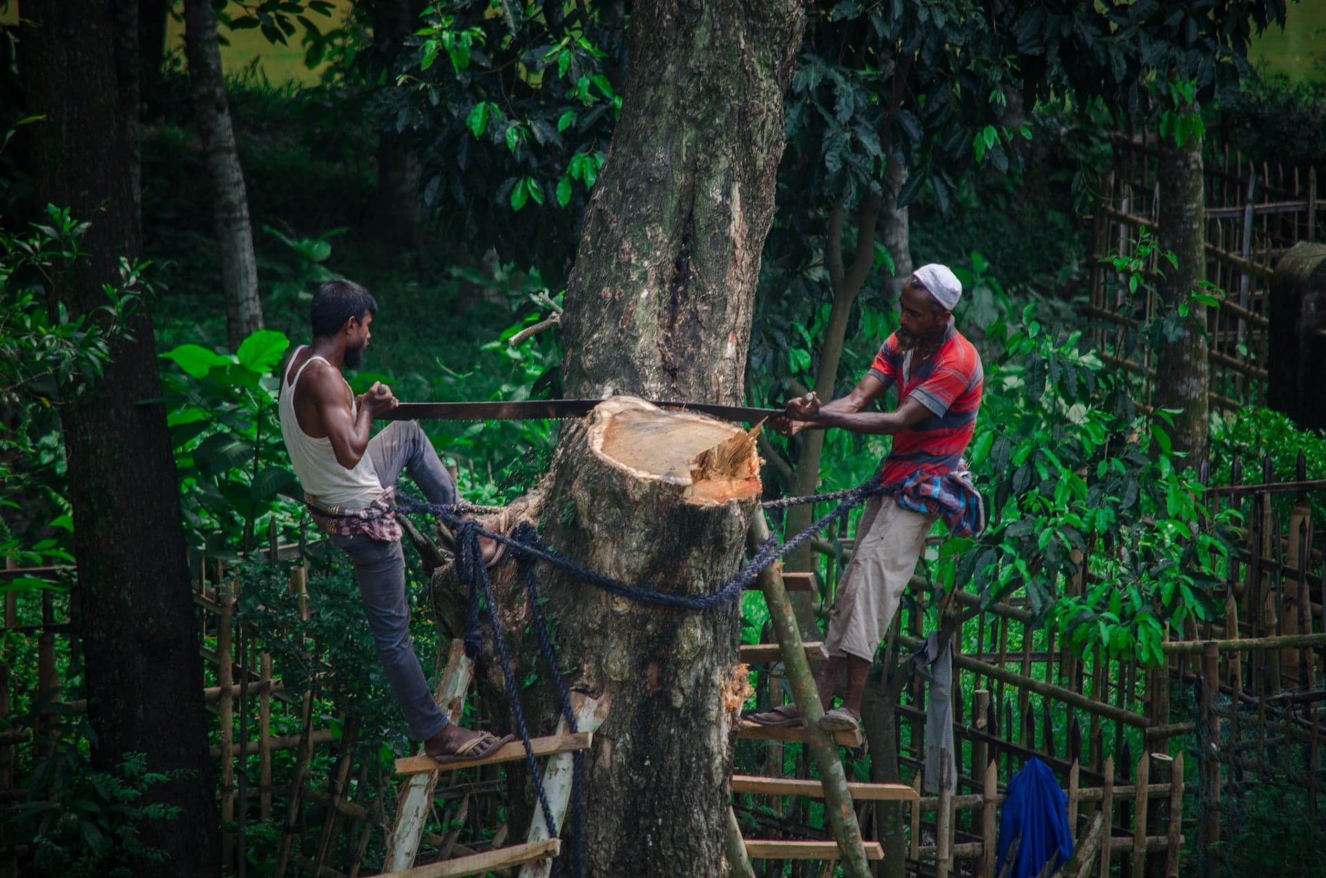 Finance News - Chinese Banks Accused of Deforestation Funding
